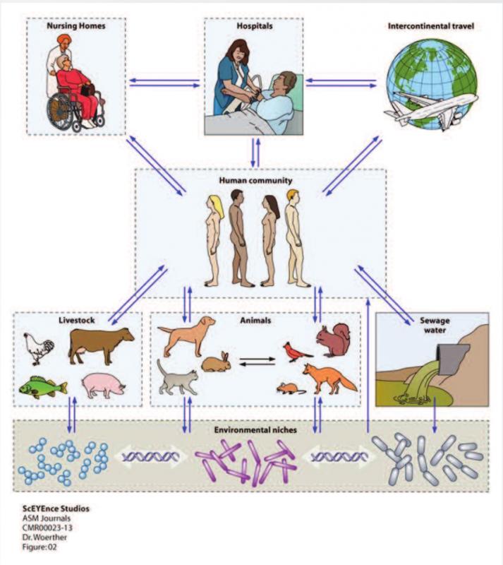 epidemiologyvectorsforAMR.png