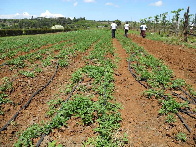 Eldoret067.jpg