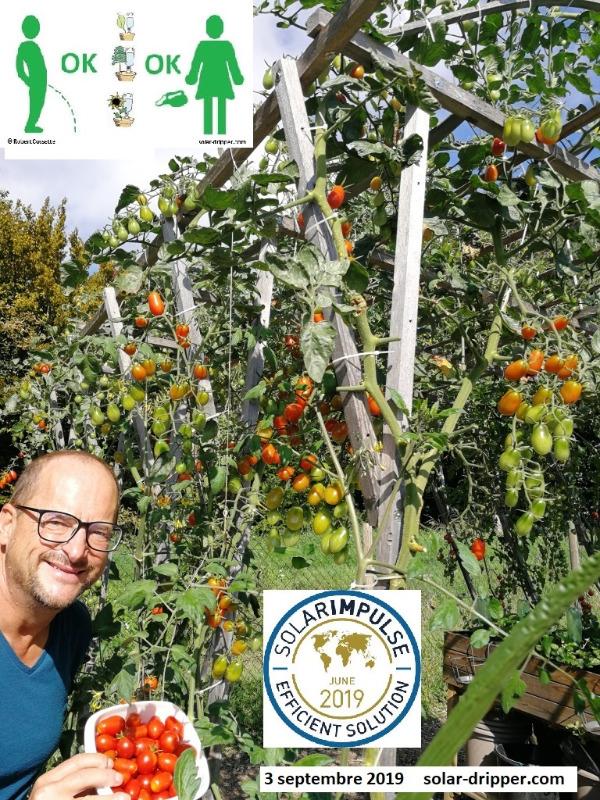 Solar-dripper-Tomates-3-sept-2019-fr.jpg