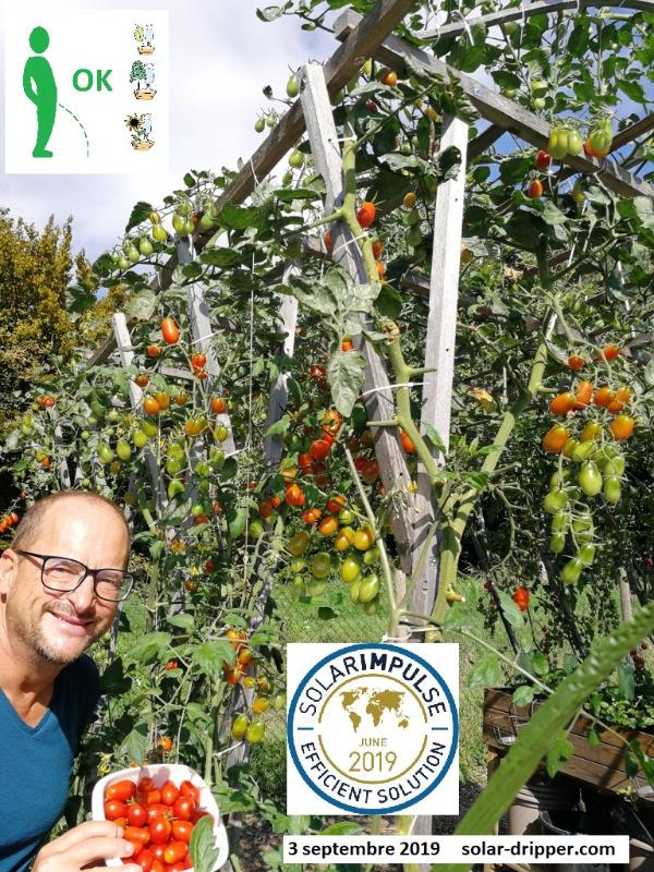 Solar-dripper-Tomates-3-sept-2019-fr_2019-12-12.jpg
