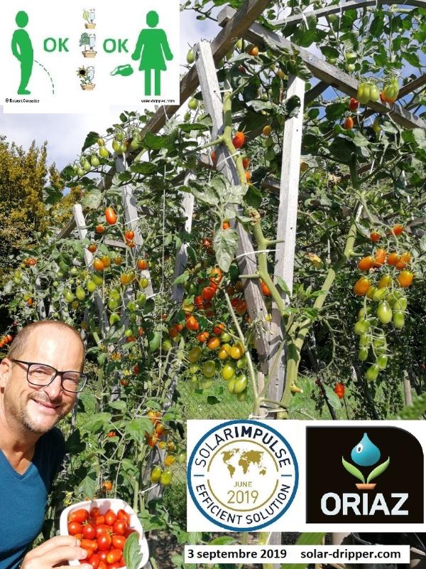 Solar-dripper-Tomates-3-sept-2019-fr_2020-11-06.jpg