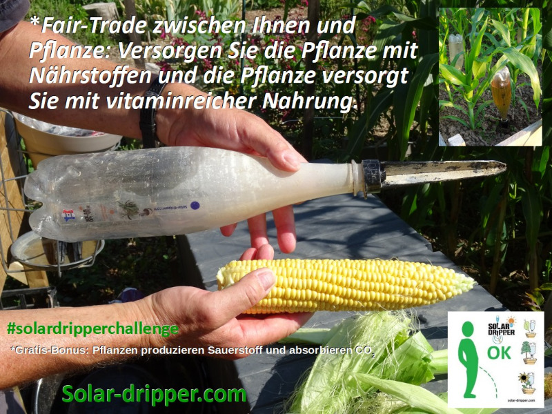 solardripperchallenge-fair-trade-all.jpg
