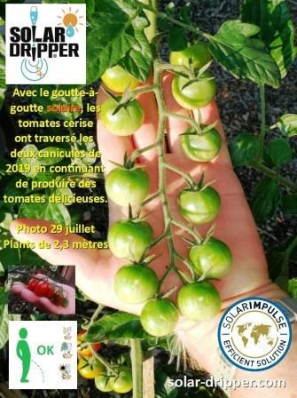tomates-29-07-2_w.jpg