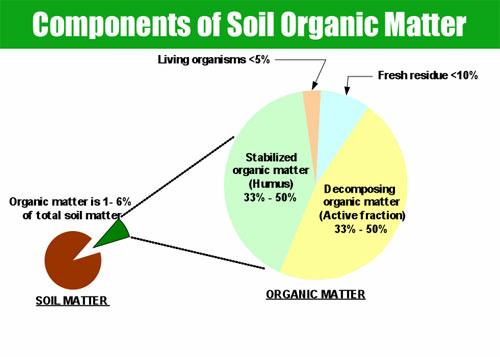 Organicmatter1-6ofSoilMatter.jpg